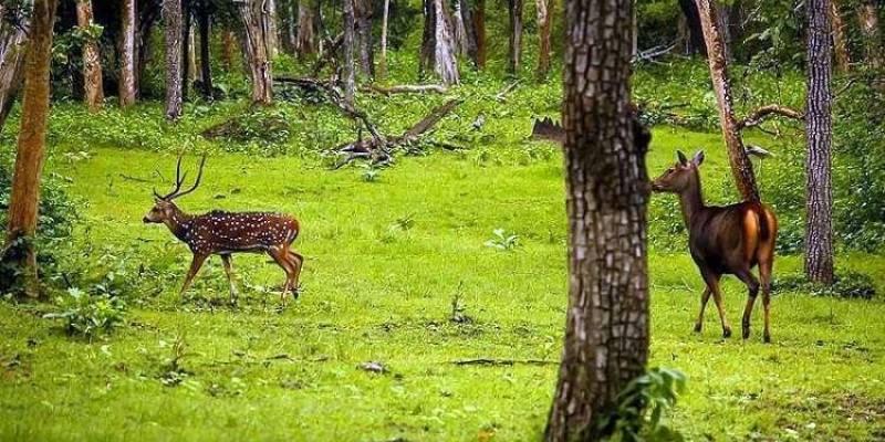 two deers at dandeli national park
