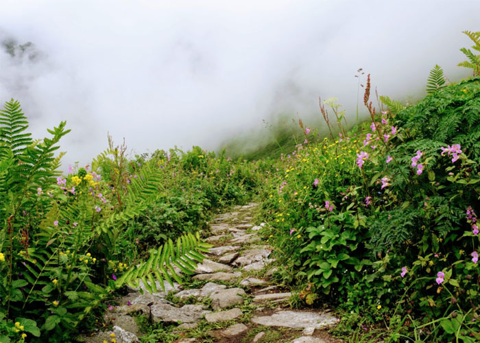 valley-of-flowers3