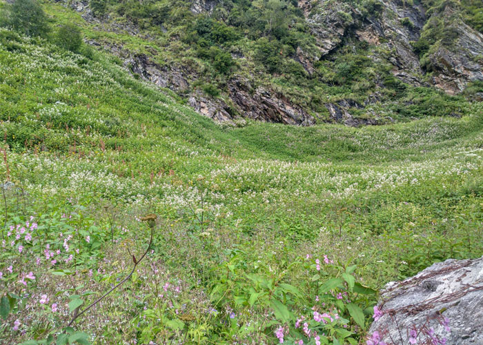 valley-of-flowers6