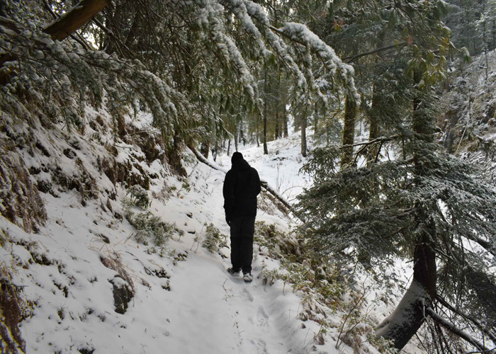 A trekker waling on deoban trail during winter snow